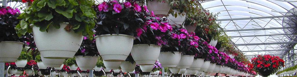Floriculture-klein
