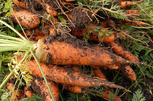 carrot-551661_640